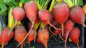 beets-944596_640